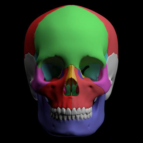 Hight quality skull - GLSL Version preview image