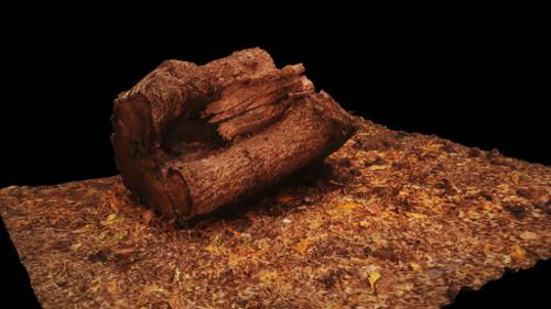 Wooden Log with Ground and Debris preview image