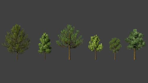 Tree preview image