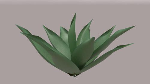 Agave attenuata preview image