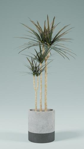 Indoor Plnats(Dracaena) preview image
