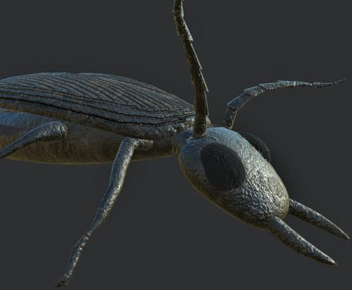 Beetle (Game ready) preview image