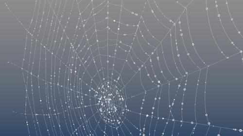 Spiderweb with dew preview image