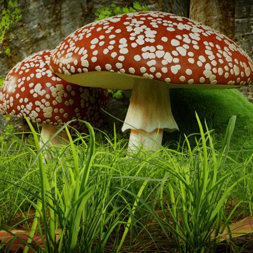 Fly Agaric / Fliegenpilz preview image