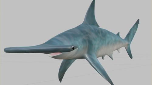 Hammerhead Shark preview image