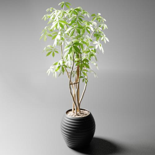 indoor plant ficus preview image
