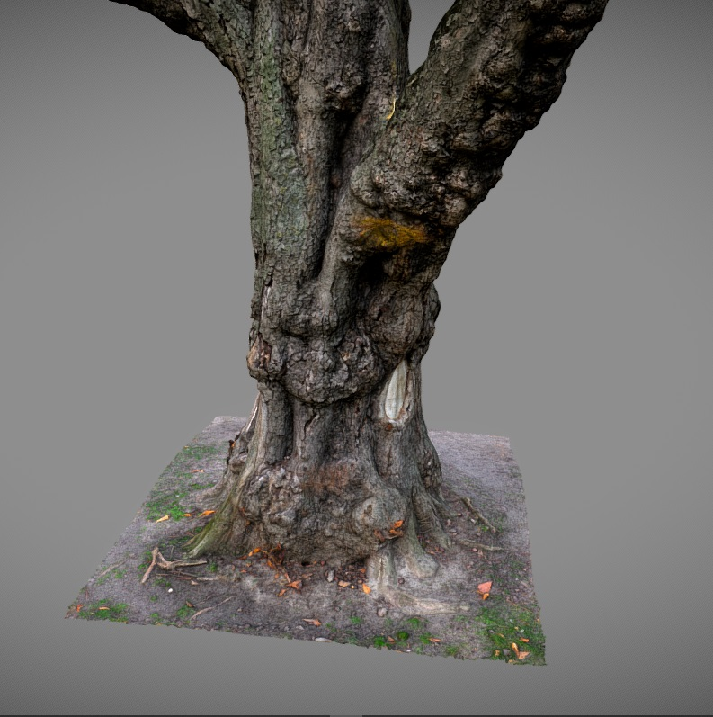Old tree preview image 1