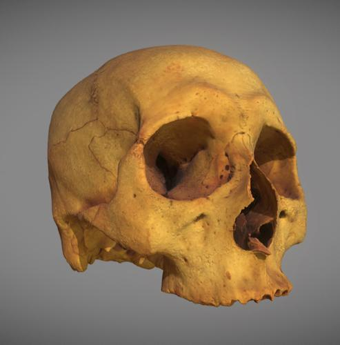 Human skull  preview image