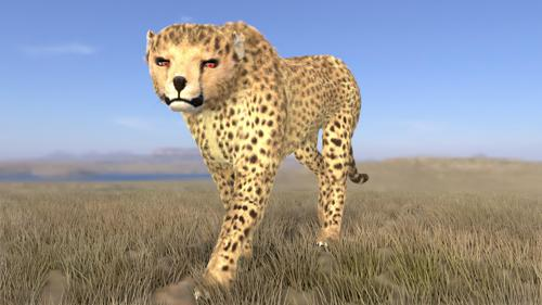 Cheetah preview image