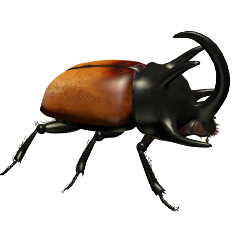 Rhinoceros beetle preview image