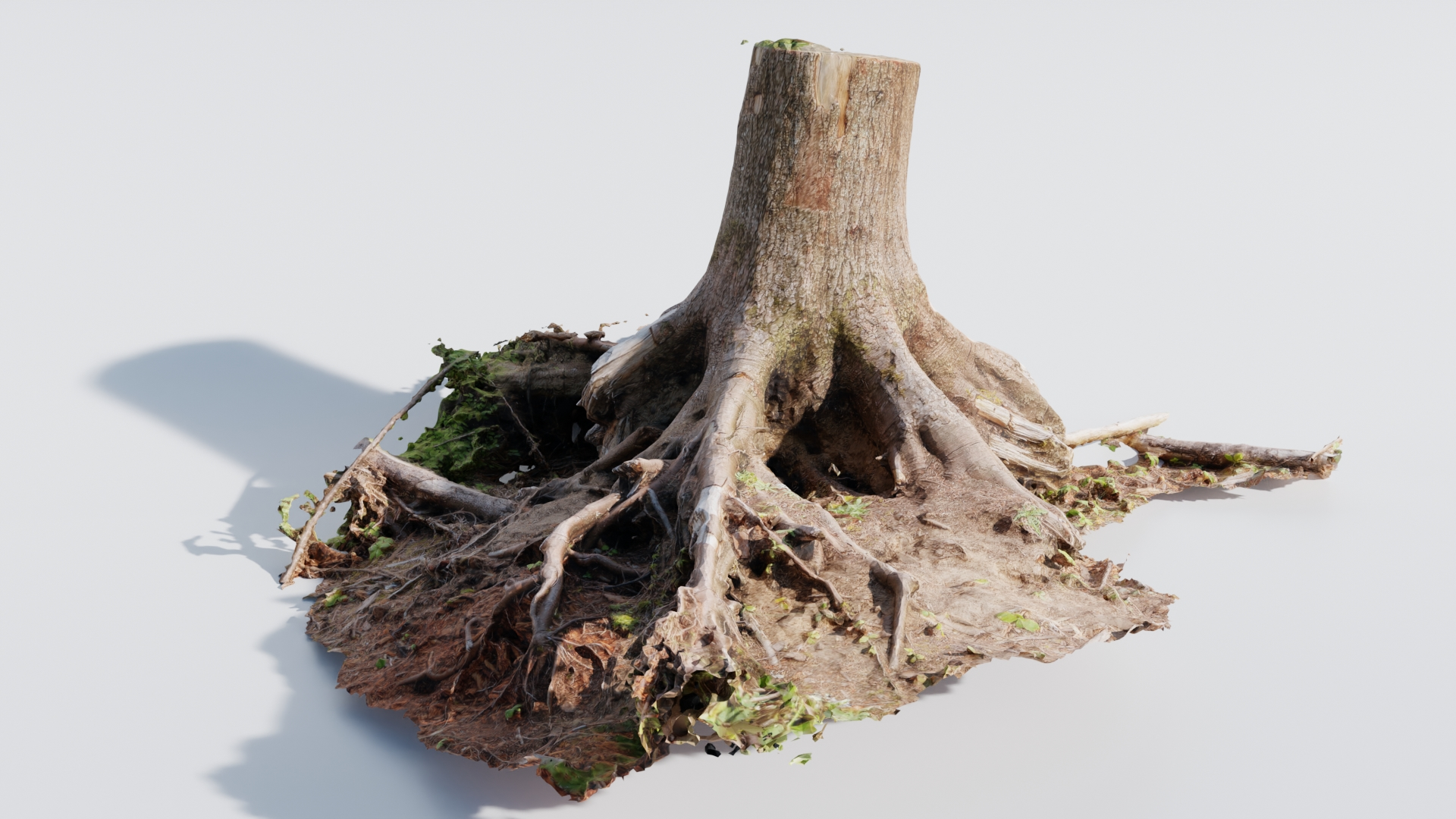 Large Tree Trunk preview image 1