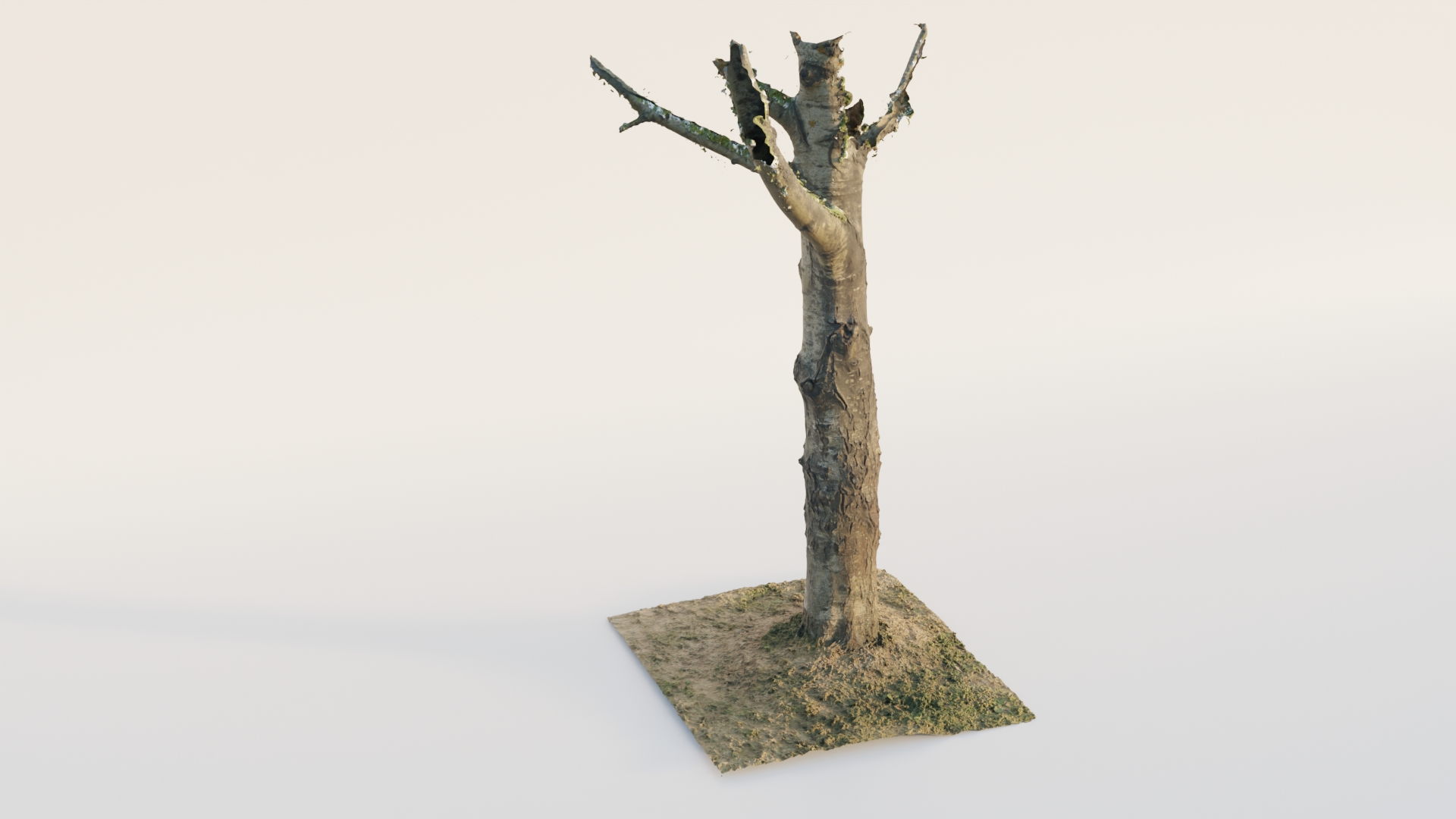 Thick Birch Tree preview image 1