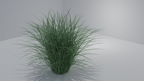 Miscanthus, Maiden Grass, Chinaschilf preview image