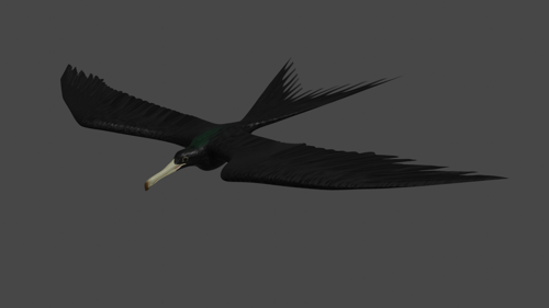 Frigate bird in fight basic Rigged preview image