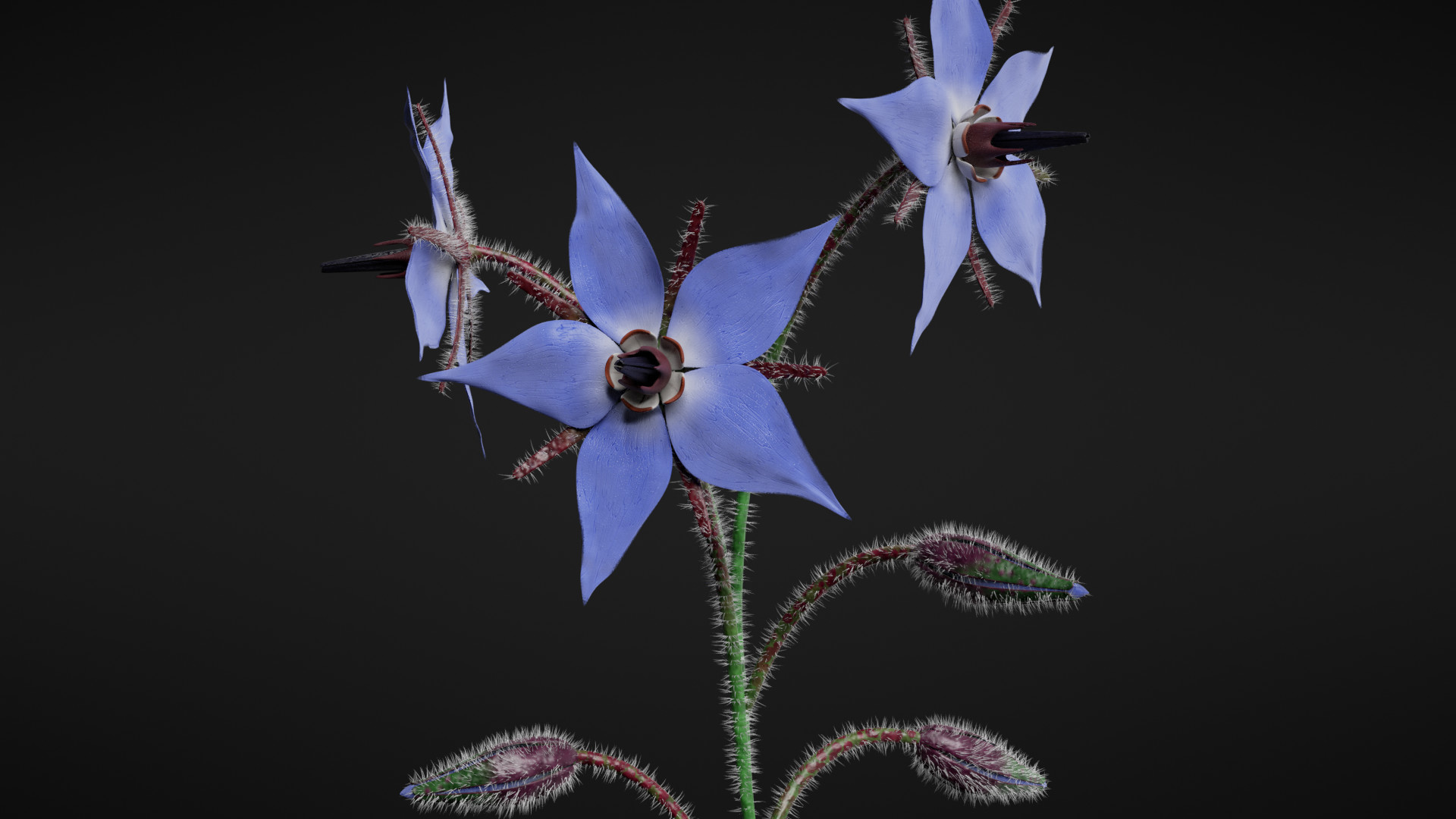 Borage Flower preview image 1