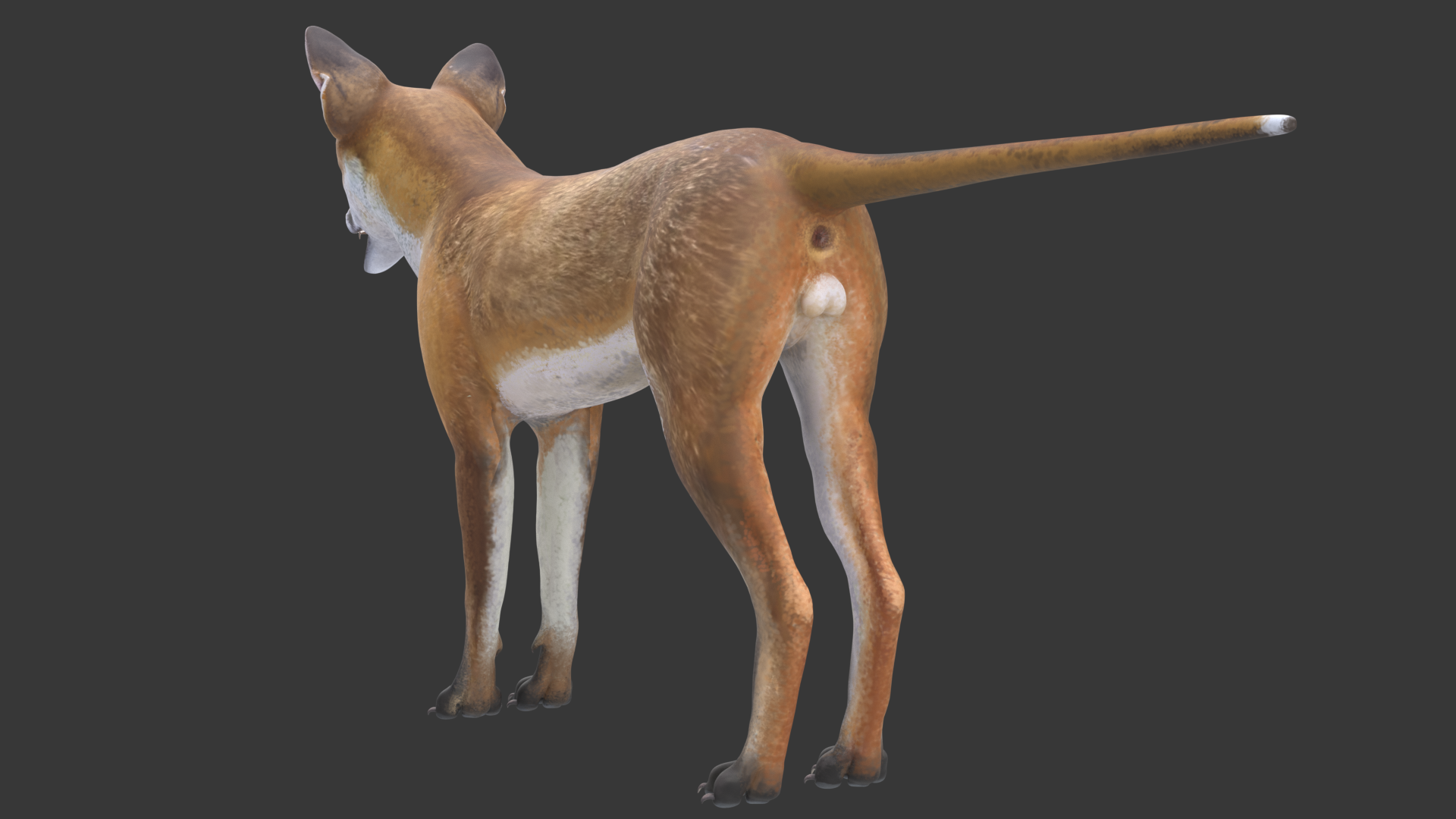 Red Fox with fur and Rig preview image 3