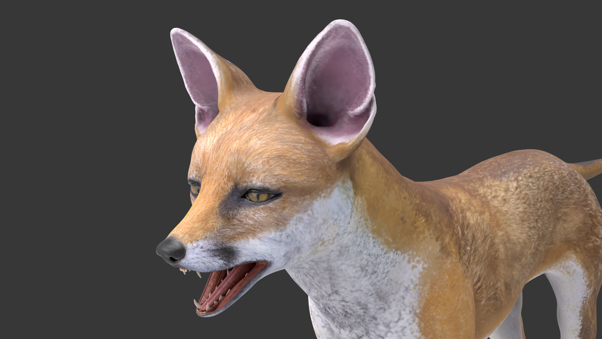 Red Fox with fur and Rig preview image 4