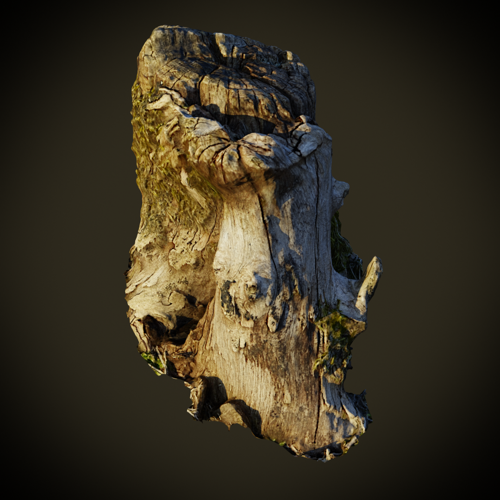 Tree Stump preview image