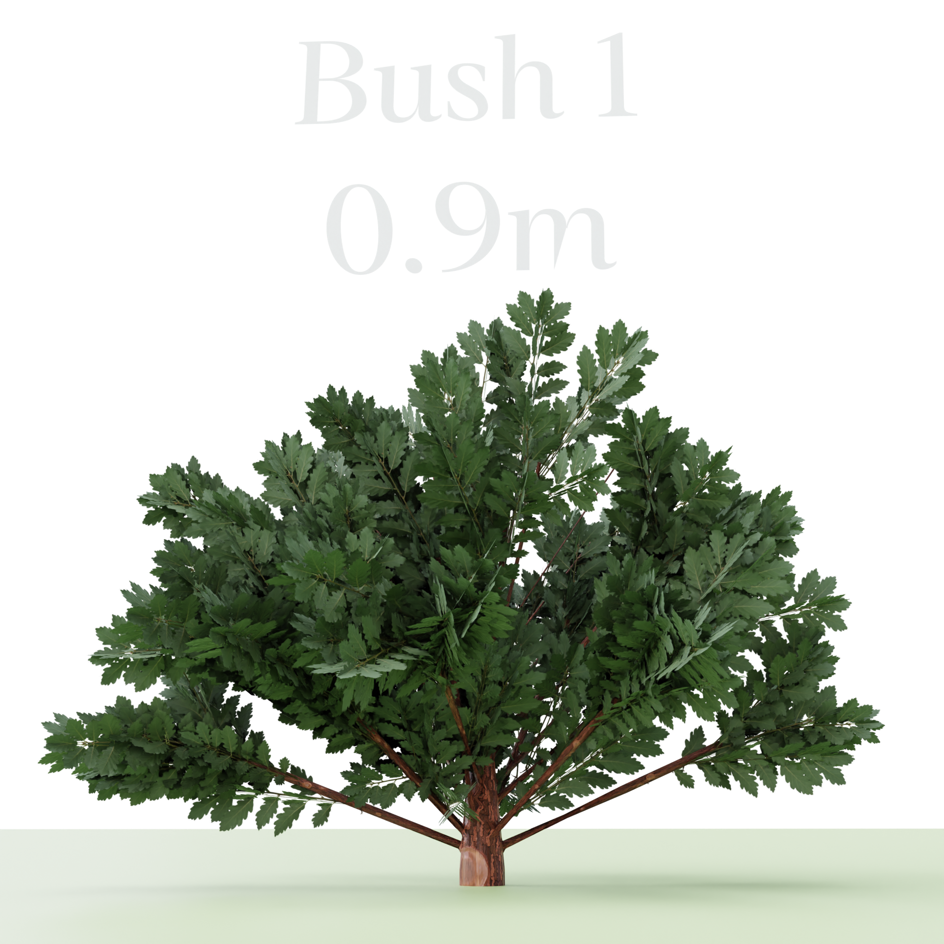 Three Bush's preview image 3