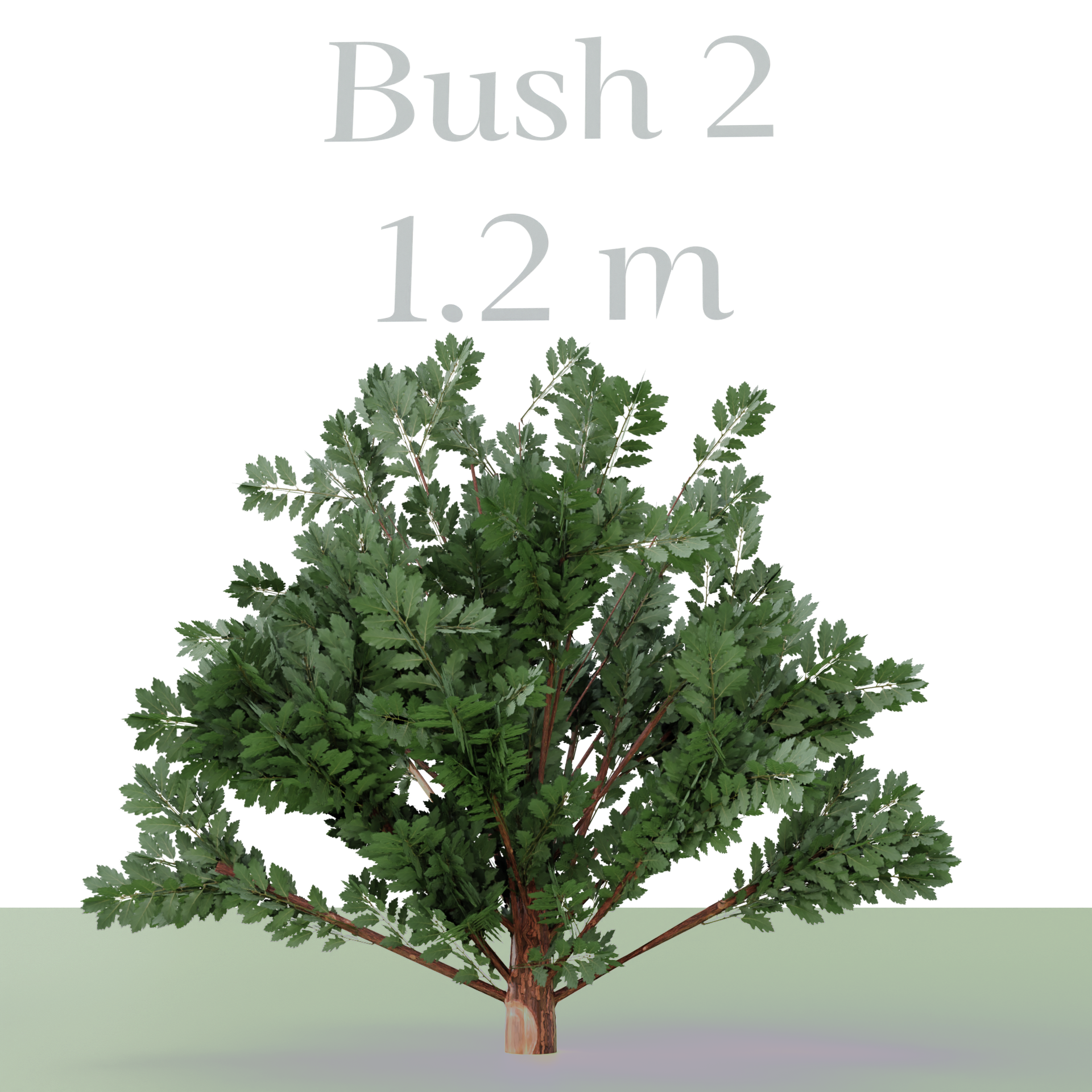 Three Bush's preview image 4