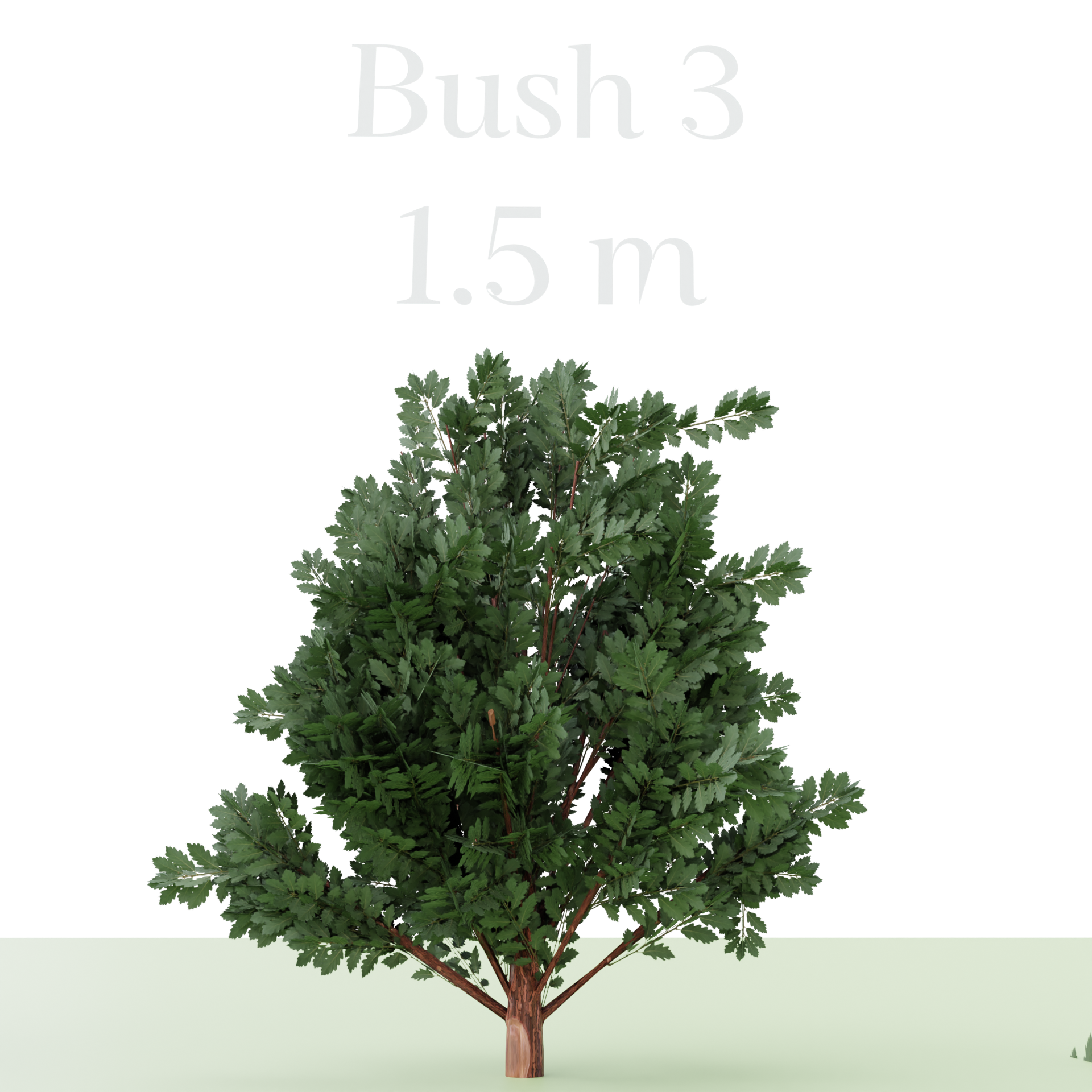 Three Bush's preview image 5