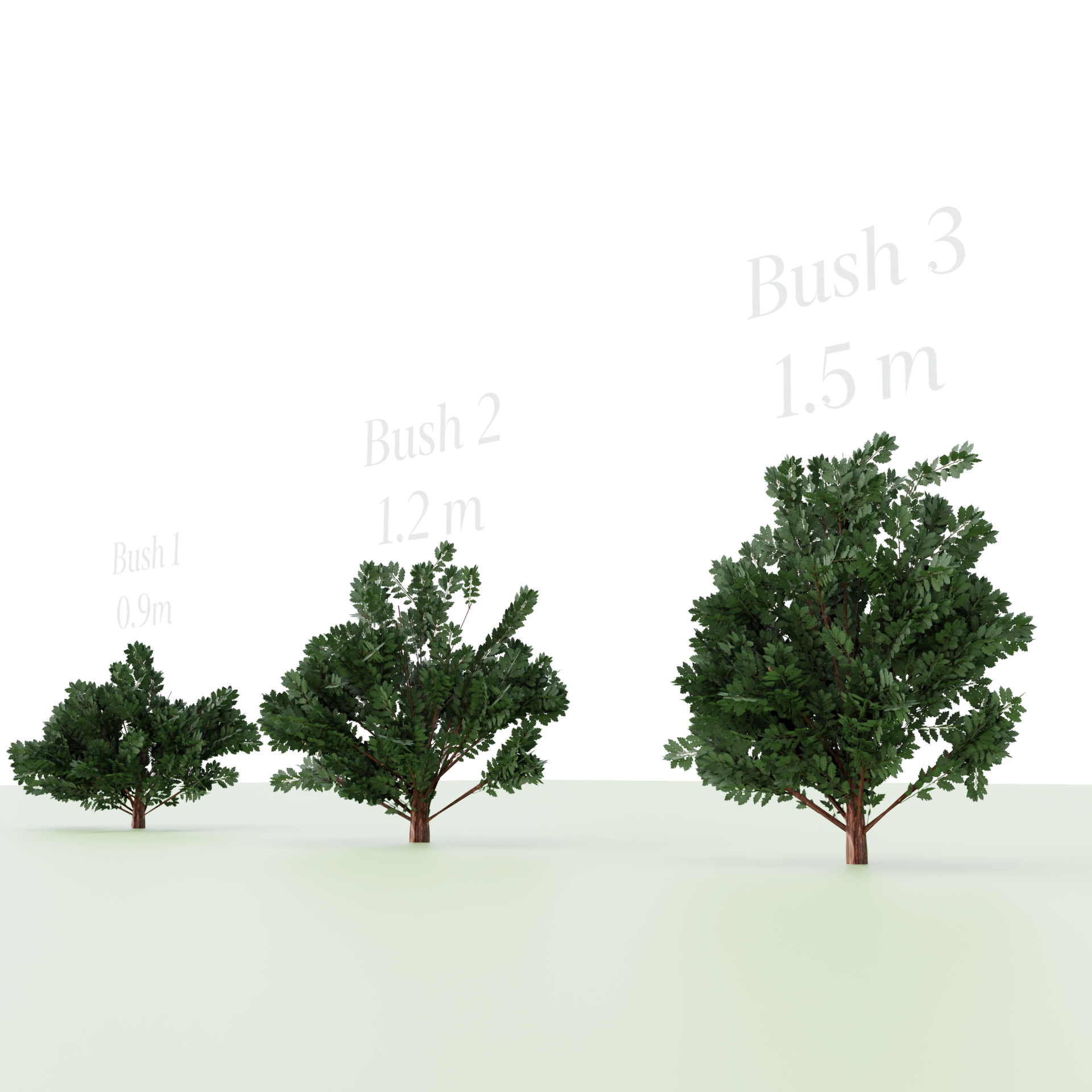 Three Bush's preview image 2