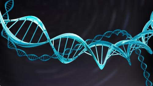 Simple DNA Model, Double Helix B.2.9 Beta preview image