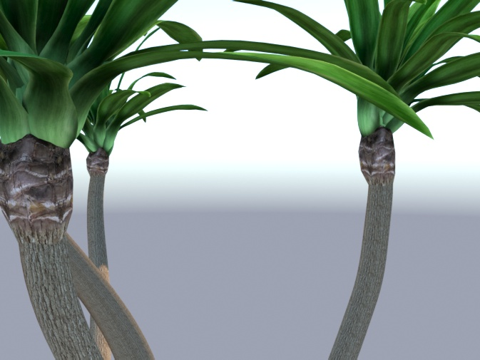 Tall Yucca preview image 2