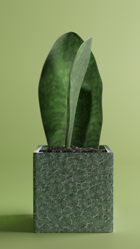 Sansevieria Victoria preview image