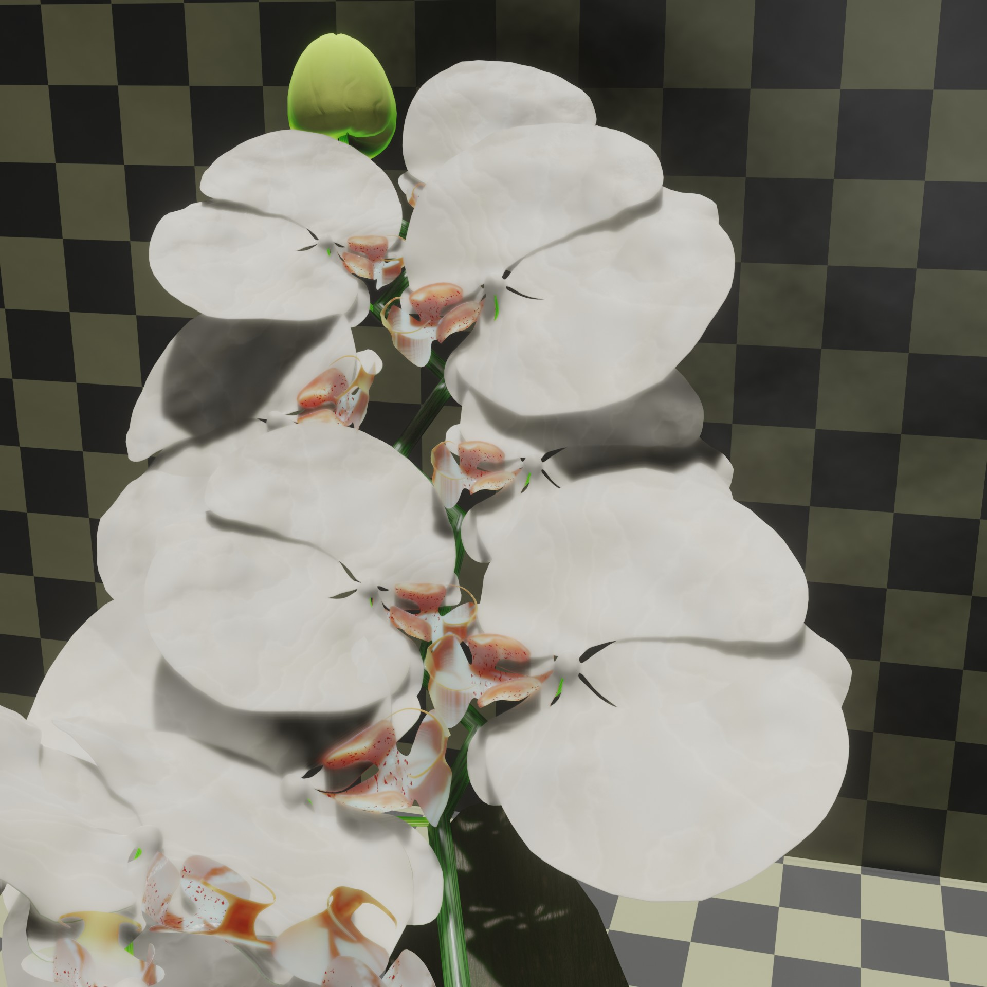 White orchid preview image 3