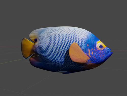 Tropical Fish - Blueface Angelfish preview image