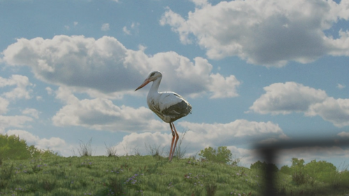 Low Poly Stork / Crane on grass hill preview image