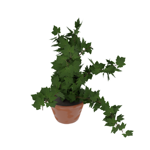 Potted Ivy aka Ivy in a pot! preview image
