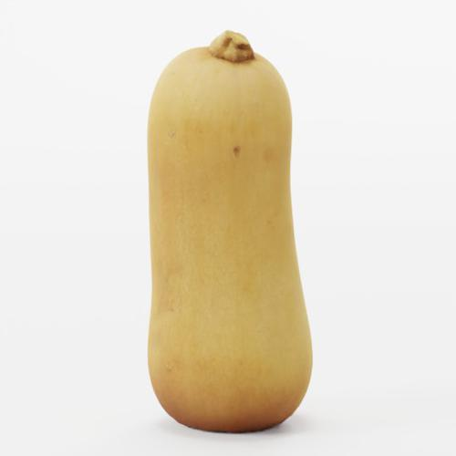 Butternut Squash  preview image