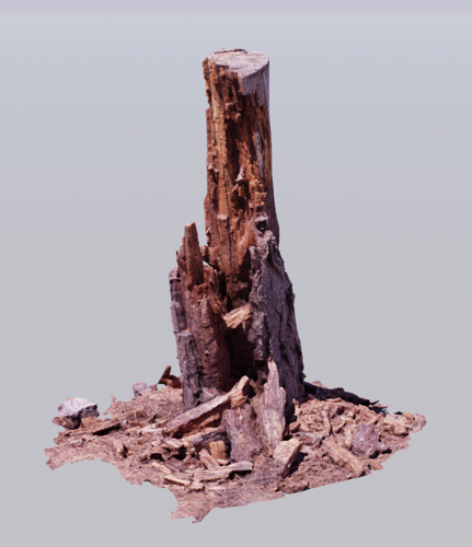 Pine Stump 01 preview image
